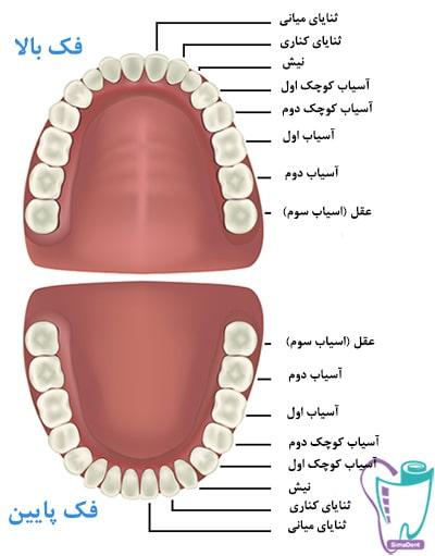 تعداد دندانها